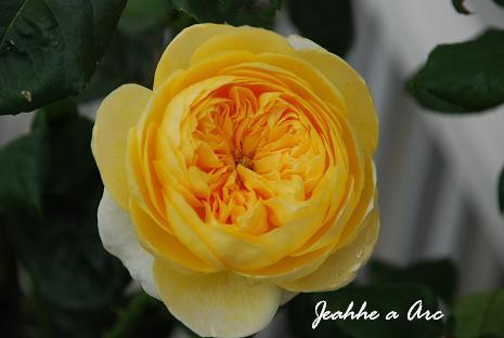 DSC_0046_20120629120641.jpg