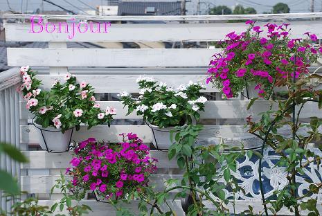 DSC_0035_20120915111805.jpg