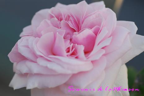 DSC_0057_20120628115616.jpg
