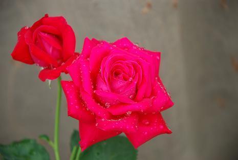 DSC_0058_20120715075015.jpg