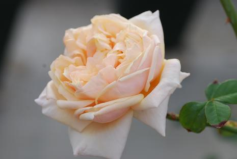 DSC_0009_20121111085418.jpg