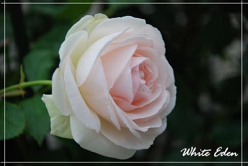 DSC_0065_20120615065545.jpg