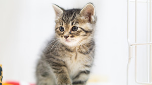 昔飼っていた子猫は病気で一年生きられず死んでしまった。「今度は私の娘にうまれておいで」と泣きながら見送った。そして今。1歳になる娘がその猫と全く同じ行動をとる。