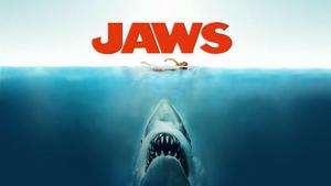 海で浮き輪つけてバシャバシャ泳いでいたら足の下をサメがスーッと・・・・