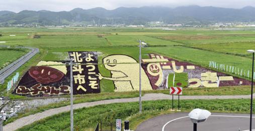 【北斗】北海道新幹線新函館北斗駅(北斗市)前の「田んぼアート」が、見頃を迎えている。