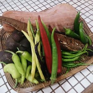 そらまつり用の野菜