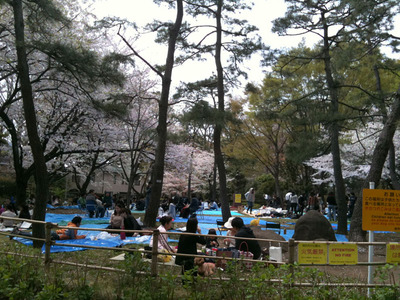 有栖川公園の桜IMG_0692