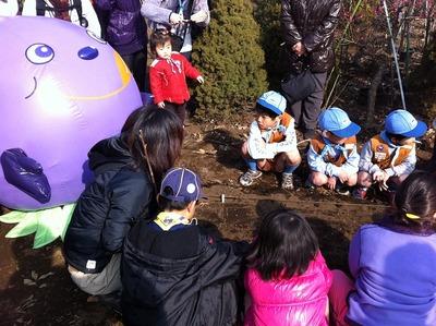 小金井桜1