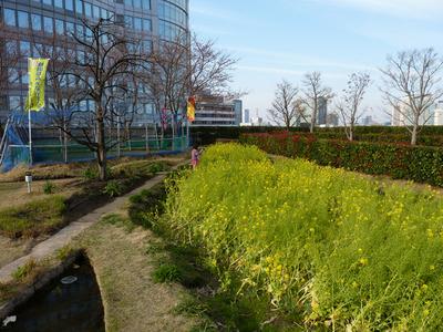 P1030834_たんぽ小町_菜の花