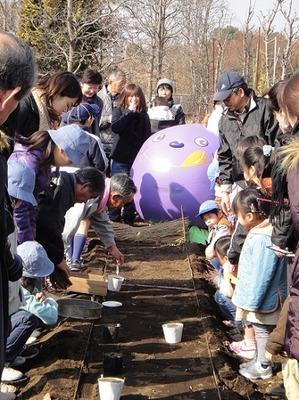 小金井桜 2