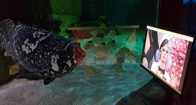 イギリス 水族館 ネットフリックスに関連した画像-04