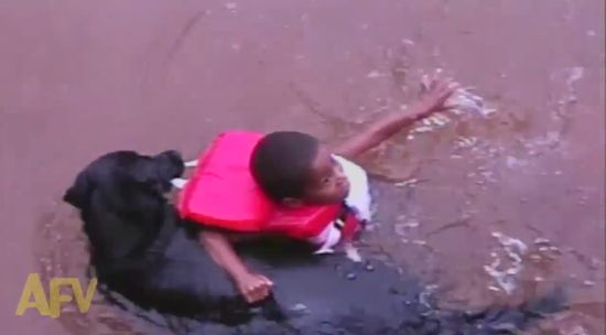 救助犬が水遊びを楽しむ子供を救助に関連した画像-02