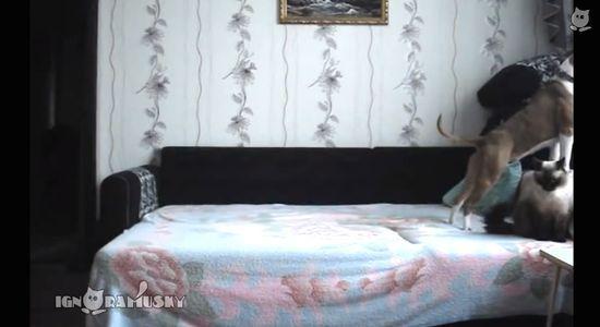 ベッドに上がることを禁止された犬に関連した画像-09