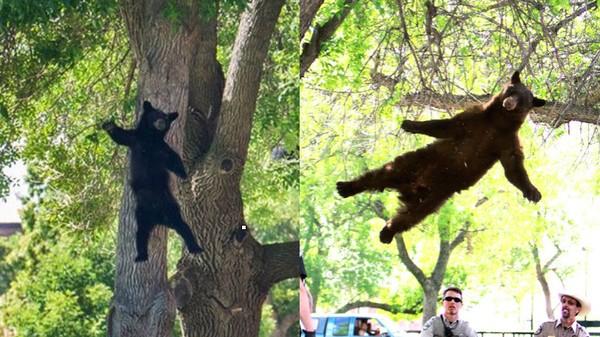木から落ちたクマに関連した画像-01