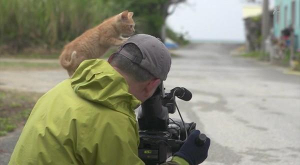 岩合光昭の世界ネコ歩き「沖縄」に関連した画像-07