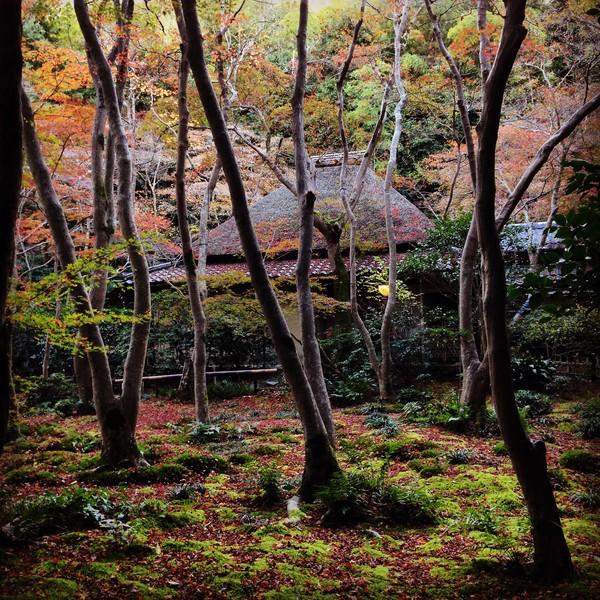 今年2015の京都の紅葉はガッカリに関連した画像-02