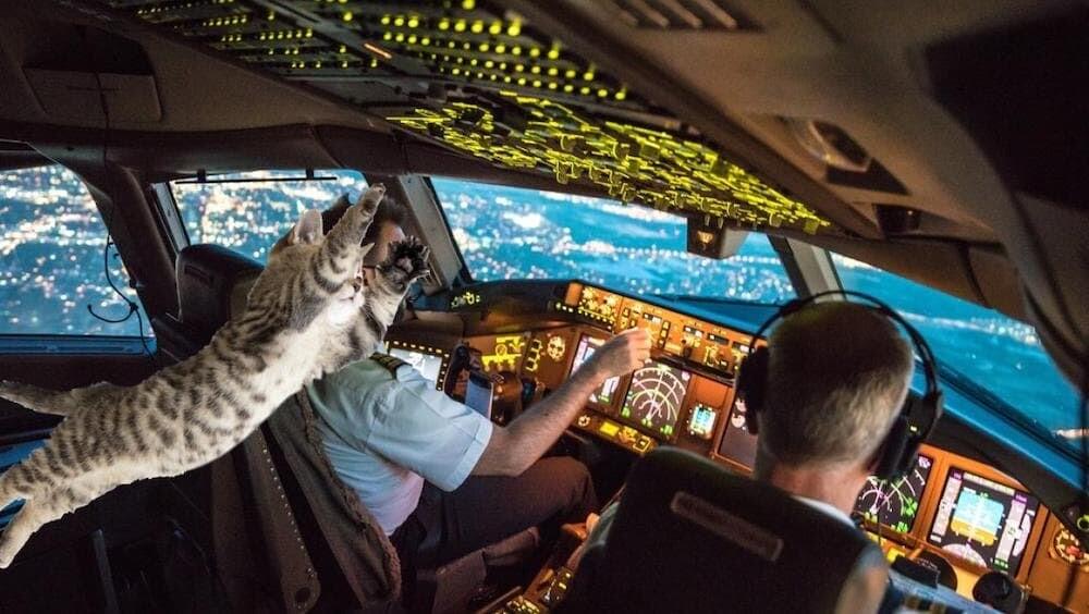 ネコ パイロット 緊急着陸 スーダン