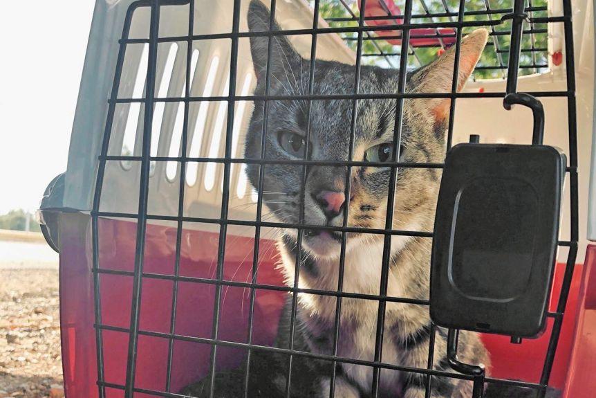 オーストラリア 猫 引っ越しに関連した画像-01