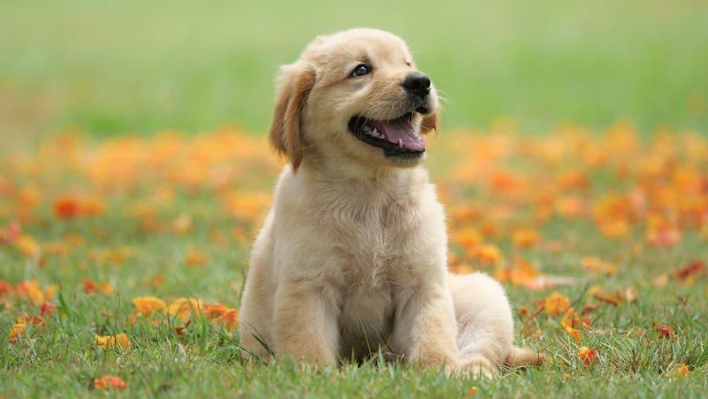 犬 OnBuy 調査