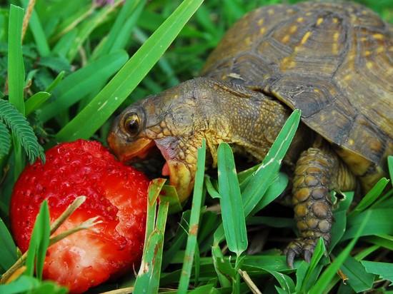 食べ物を前にヘブン状態の動物に関連した画像-08