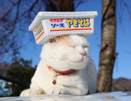 日本のネコ『のせ猫』が海外で評判に関連した画像-07