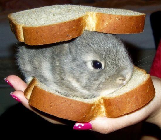 イギリス人はサンドイッチすら作れないに関連した画像-04
