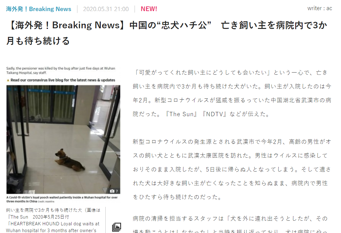 中国 病院 犬 ハチ公に関連した画像-02