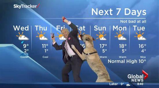 お天気コーナーで格闘する予報士と犬に関連した画像-01