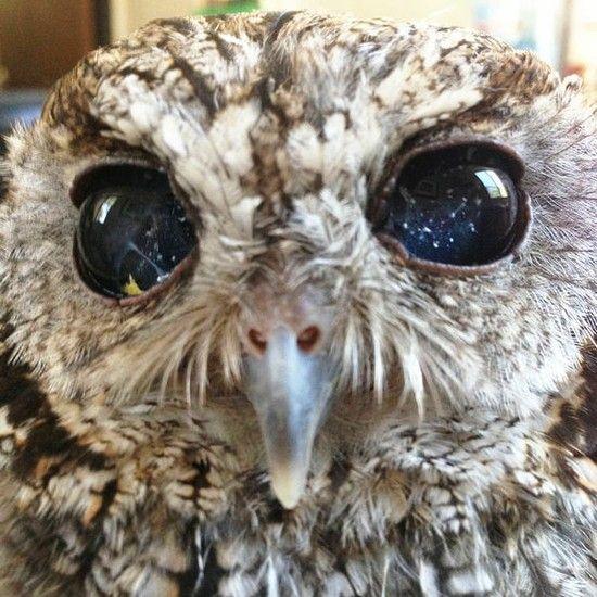 「宇宙の瞳」を持つ盲目のフクロウに関連した画像-04