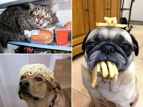 食べ物を前にヘブン状態の動物に関連した画像-13