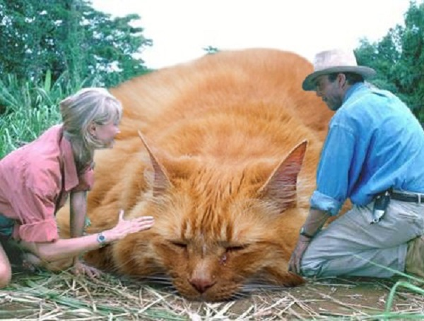 「ジュラシック・ワールド」の恐竜を猫にに関連した画像-03