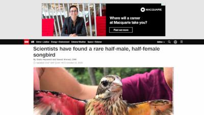 ムネアカイカル アメリカ 鳥 雌雄モザイクに関連した画像-02