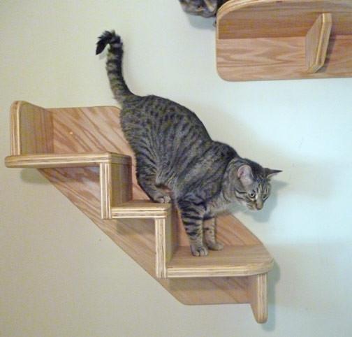 このネコ、階段を上がってるように見える?下ってるように見える?に関連した画像-04
