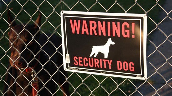 凶暴な犬に追いかけられた泥棒に関連した画像-01
