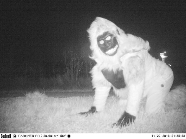 野生のピューマに関連した画像-05