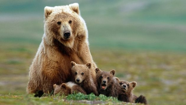 アメリカ クマ 遊具に関連した画像-01