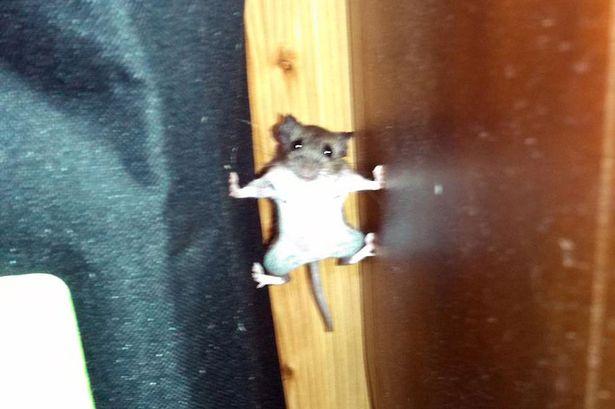 『ミッション・インポッシブル』してるネズミに関連した画像-02