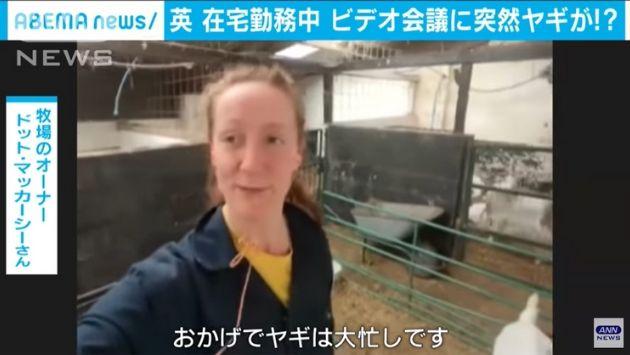 在宅勤務 ビデオ会議 ヤギに関連した画像-07