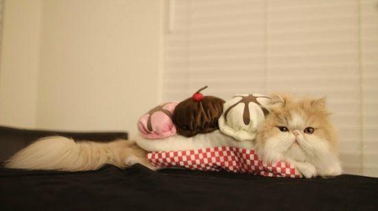 食べ物になりきったペット達のコスプレ姿に関連した画像-12
