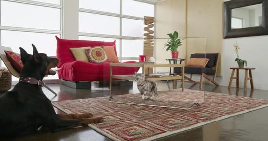 4Kテレビを見た猫や犬の面白動画に関連した画像-01
