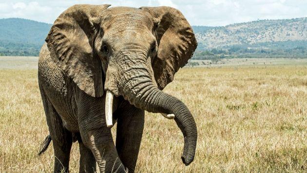 アフリカ ボツワナ ゾウに関連した画像-01