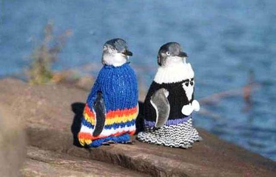 ペンギンにセーターをに関連した画像-05