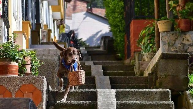 コロンビア 犬 配達に関連した画像-03