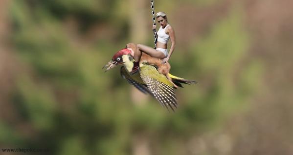 イタチがキツツキの背中に乗って、空を飛んだに関連した画像-12