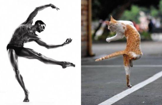 ネコだけど、モデルのポーズに関連した画像-14