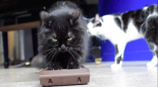 あなたを殺そうとしているネコに見られる、8つの行動パターンに関連した画像-05