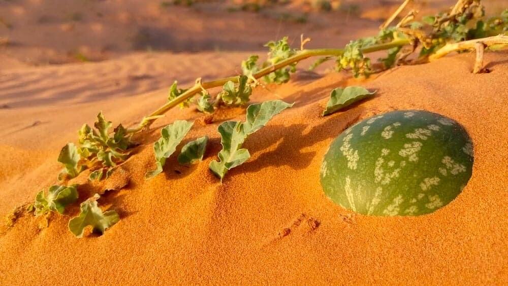 火星 スイカ ニューヨーク・タイムズ アメリカ 誤報