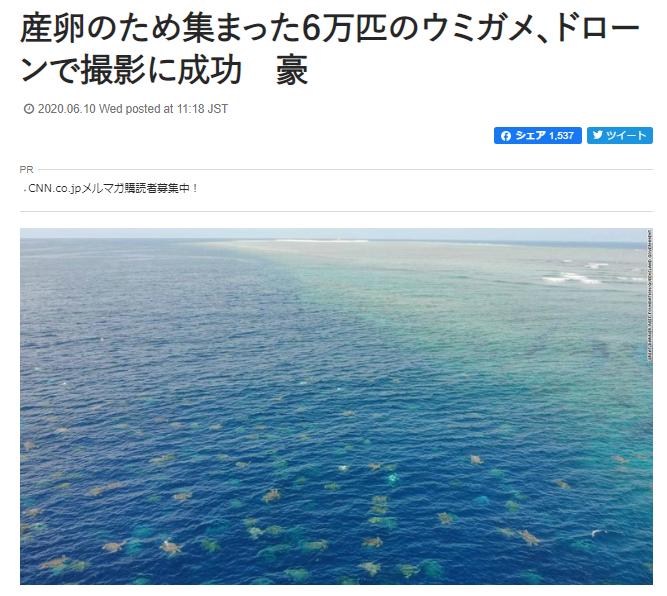 オーストラリア ウミガメ ドローンに関連した画像-02