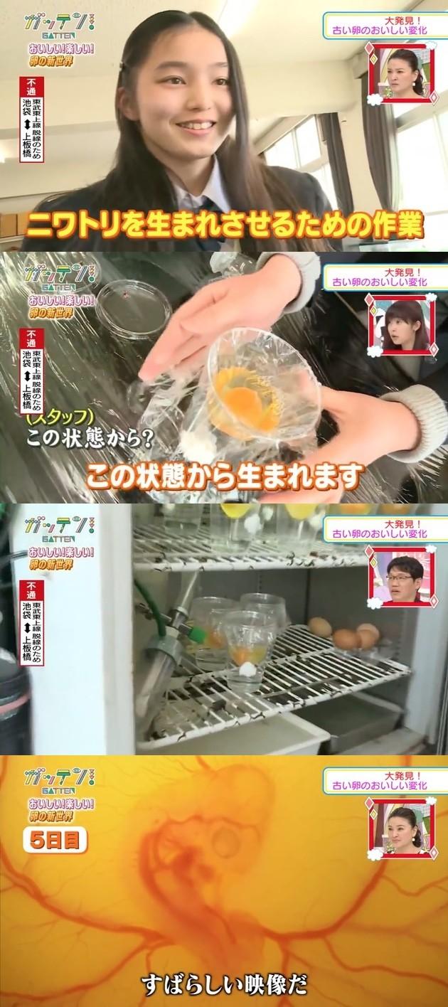 『ためしてガッテン』殻を割った卵からヒヨコをふ化に関連した画像-02