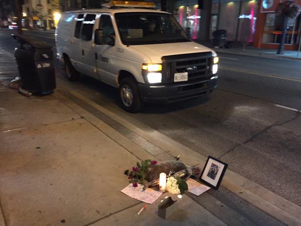 街中で死んだアライグマに、カナダ人が続々と追悼に関連した画像-09